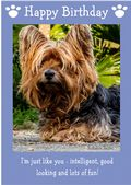 "Yorkshire Terrier-Happy Birthday - ""I'm Just Like You"" Theme"